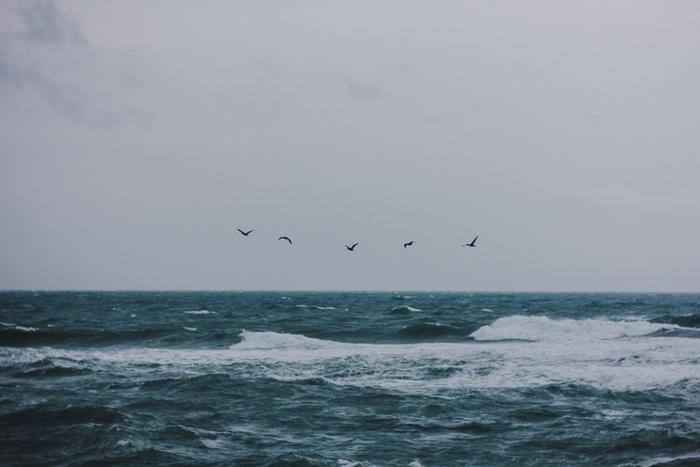 Бурлящее от шторма море Черное море, Шторм, Новороссийск, Широкая балка, Птицы, Canon60D, Мануальная оптика, Гелиос 77м-4, Длиннопост