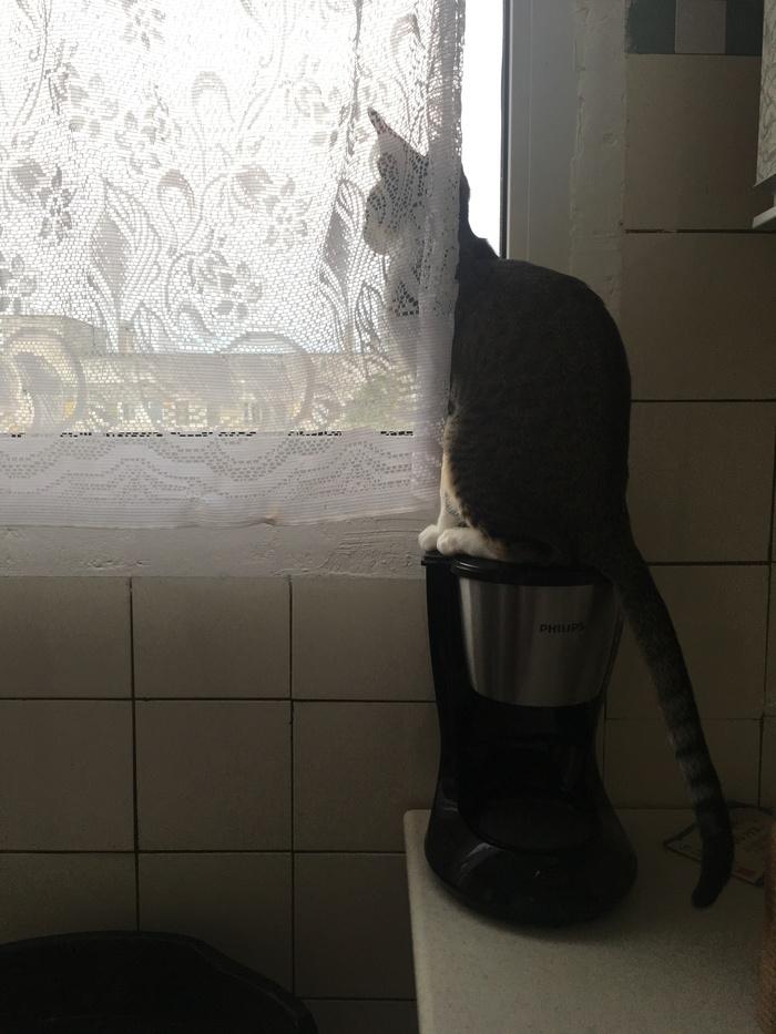 Тяжело котам без подоконника Кот, На подоконнике, Длиннопост