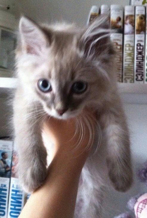 фото котенок в 3 месяца