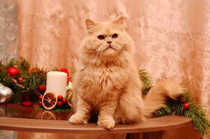 А могло все сложиться иначе... кот, история спасения, лечение, длиннопост