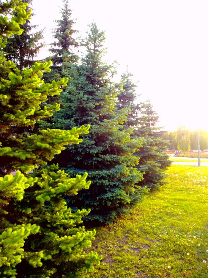 Прогулка по городу. Растительность Фотография, Белгород, Длиннопост
