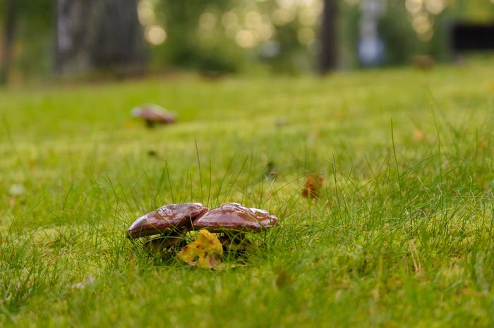 Поступь осени Фотография, Nikon d3100, Финляндия, Длиннопост