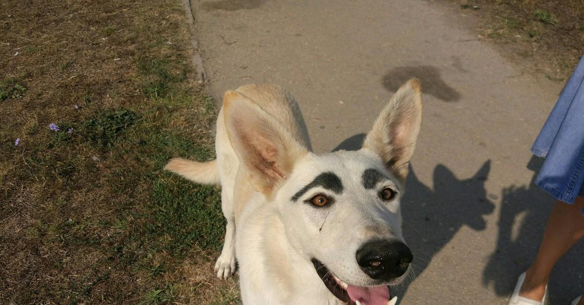 Картинки собаки с бровями