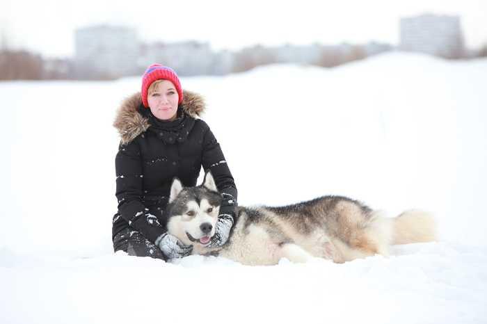 Не путю!! Аляскинский маламут, Зима близко, Катание на собаках, Нипутю, Зима
