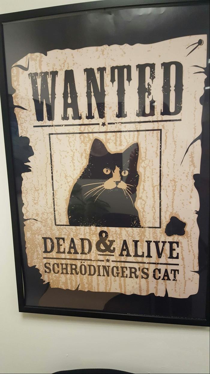 Разыскивается живым и мертвым - кот Шрёдингера