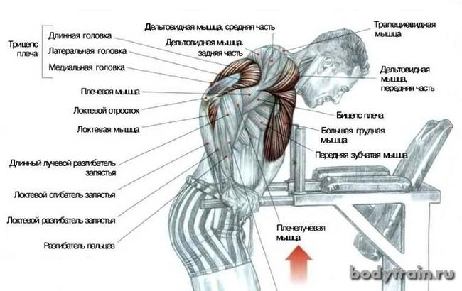 Отжимания на брусьях Спорт, Здоровье, Воркаут, Программа тренировок, Упражнения, ЗОЖ, Длиннопост
