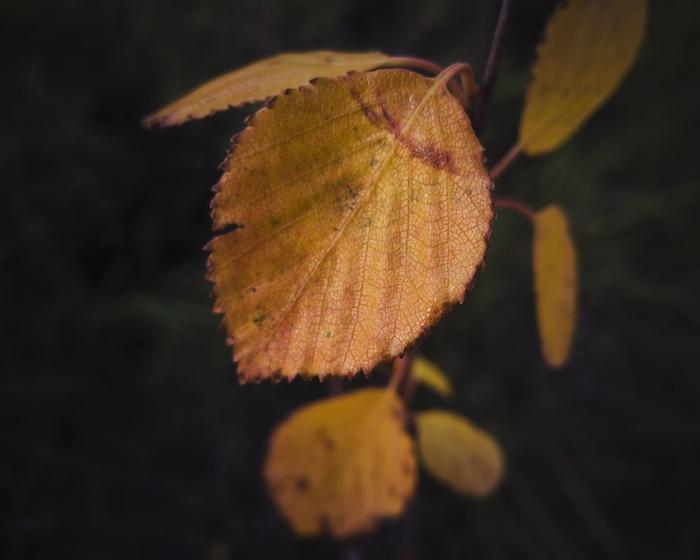 А можно поделиться? Фотография, Осень, Oneplus, Длиннопост
