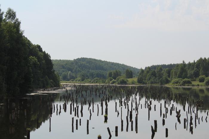 Лес под водой Природа, Экосистема, Пень, Лес, Вода