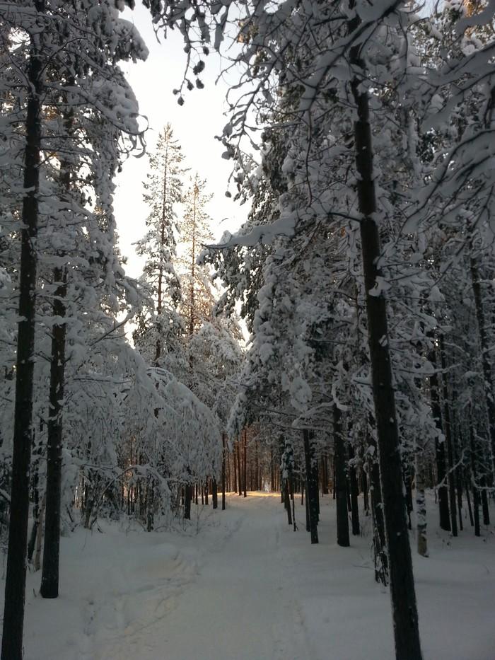 Любите ли вы зиму так, как люблю ее я? Зима близко, Снегоход, Красота природы, Длиннопост