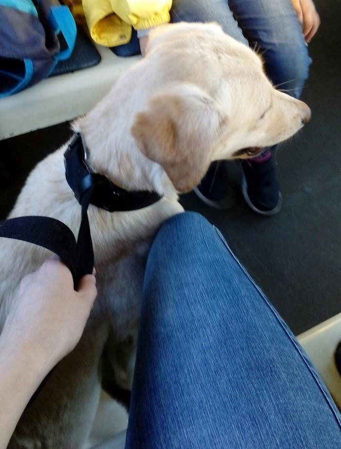 Найдена собака! Подольск! подольск, Помощь, Пропала собака, найдена собака, Собака, длиннопост, одинцово, новая трехгорка