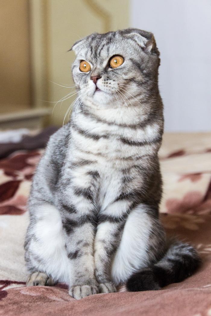 И снова моя котейка Кот, Фотография, Моё, Длиннопост
