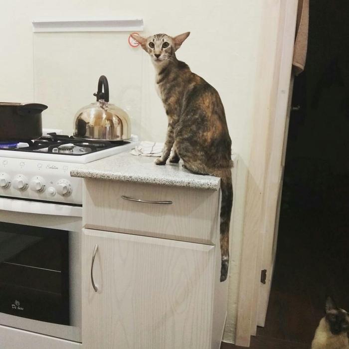 Добби хочет кушать