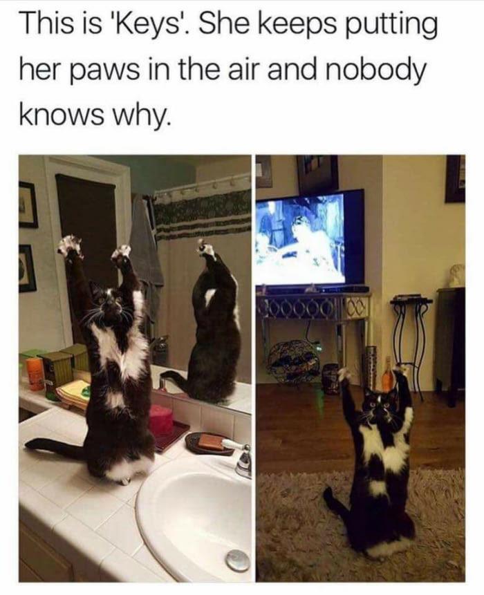 """Это """"Кис"""". Она поднимает свои лапки вверх и никто не знает почему. Кот, Лапки, Во славу Сатане, Длиннопост"""