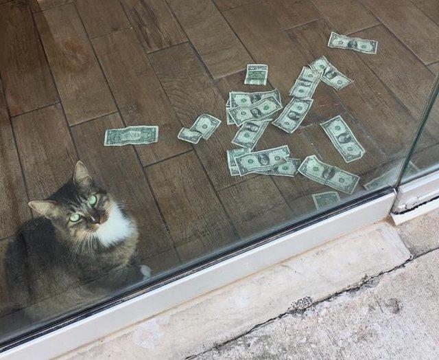 Этот кот настолько любит деньги, что придумал свою схему честного отъема наличных у людей Кот, Остап Бендер, Отъем денег, Схема, Длиннопост