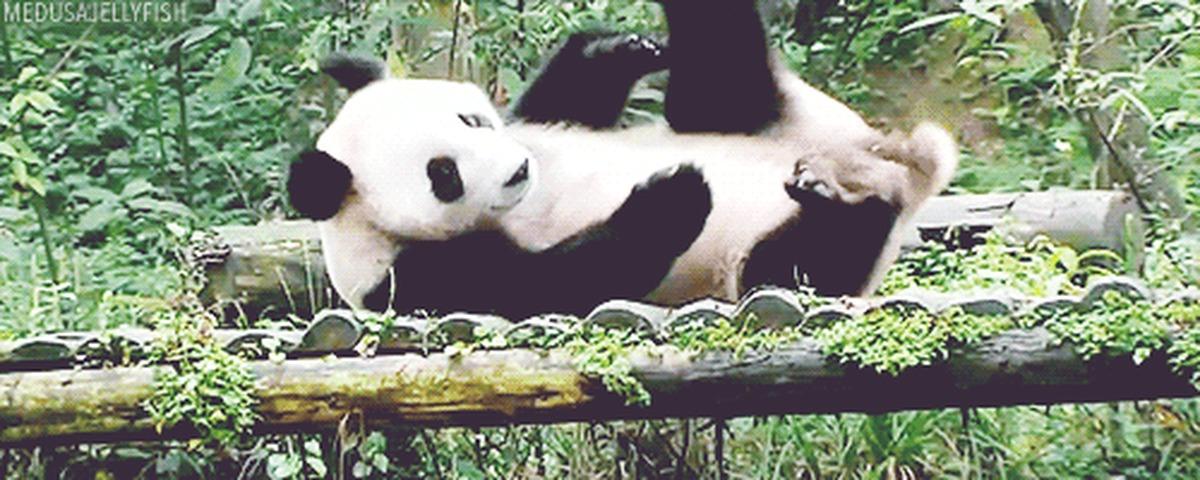 Панда и качели гифка