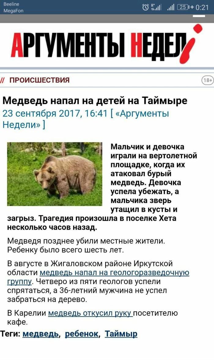 Медведь загрыз ребёнка на Таймыре.