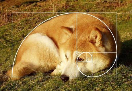 Собака-золотосеченяка