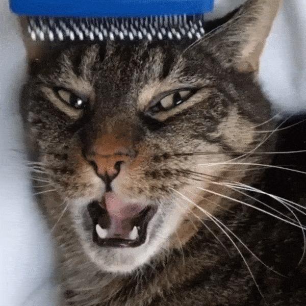 Cat.exe не отвечает Гифка, Кот, Catexe, Зависание