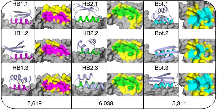 Компьютерное моделирование помогло инактивировать вирус гриппа мини-белками Наука, Белок, Вирус, N+1, Лига синего бобра, Баян, Длиннопост