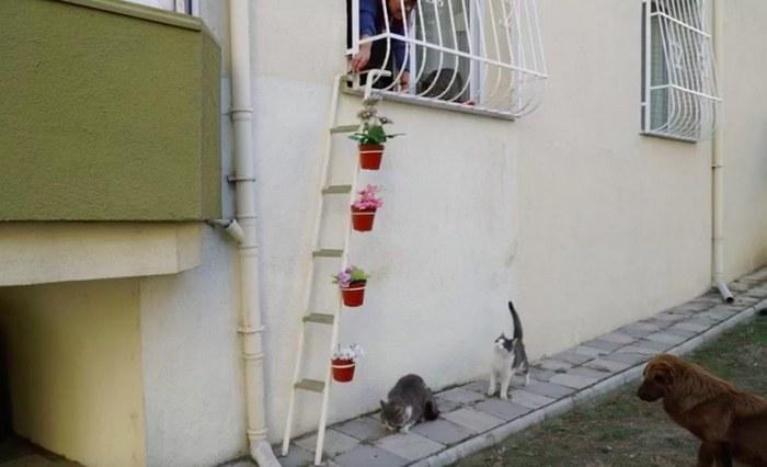 kitten play information