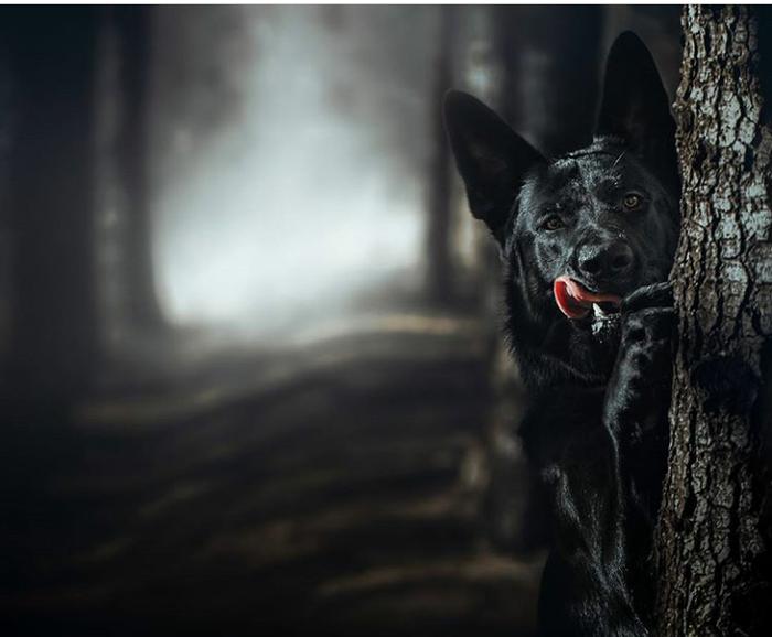 Картинки по запросу Собак использовали многие странствующие колдуны