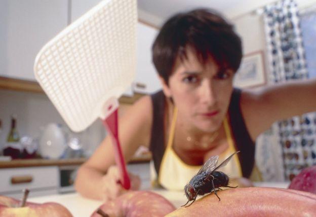 Почему муху так сложно прихлопнуть? Муха, Мухобойка, Газеты, Тапки, Нейросигналы, Зрение, Колбочки, Палочки, Длиннопост