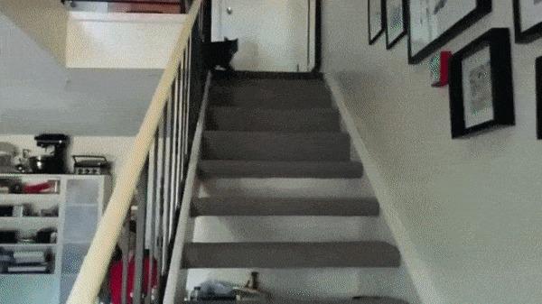 Это какая-то неправильная кошка