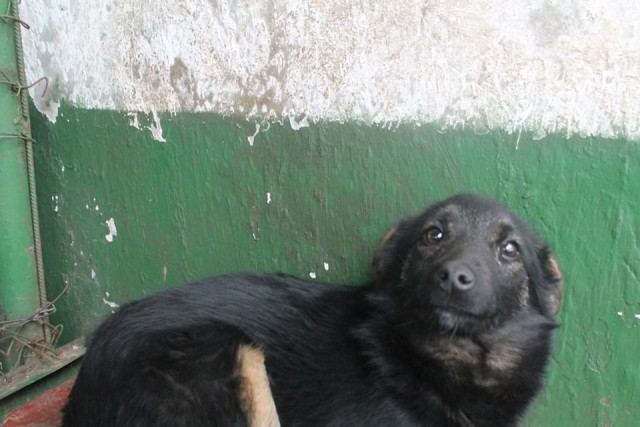 5 дней на жизнь... Собака, Спасение, Пинск, Длиннопост