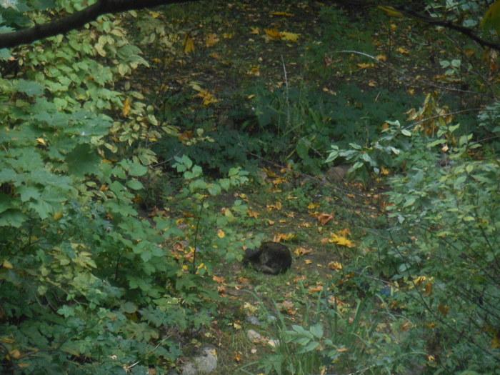 Осенняя котейка :3