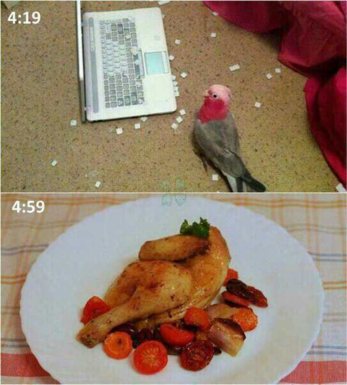 Птичку жалко!