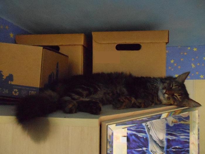 Если кот спит на шкафу - значит, пришла пора запастись печеньками и горячим чаем :3