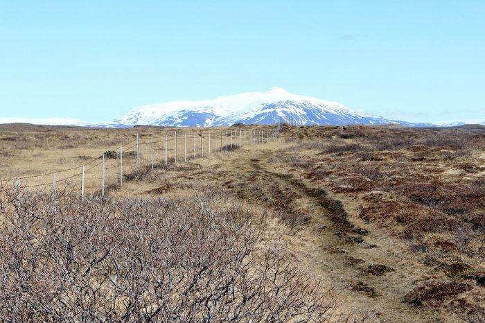 Почему Исландия осталась без лесов. Исландия, Даймонд, Цивилизация, Викинги, История, Экология, Длиннопост