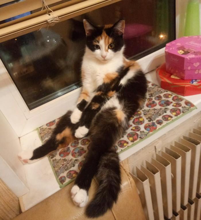 Когда забрал у кошки игрушку, что бы не шуршала ночью.