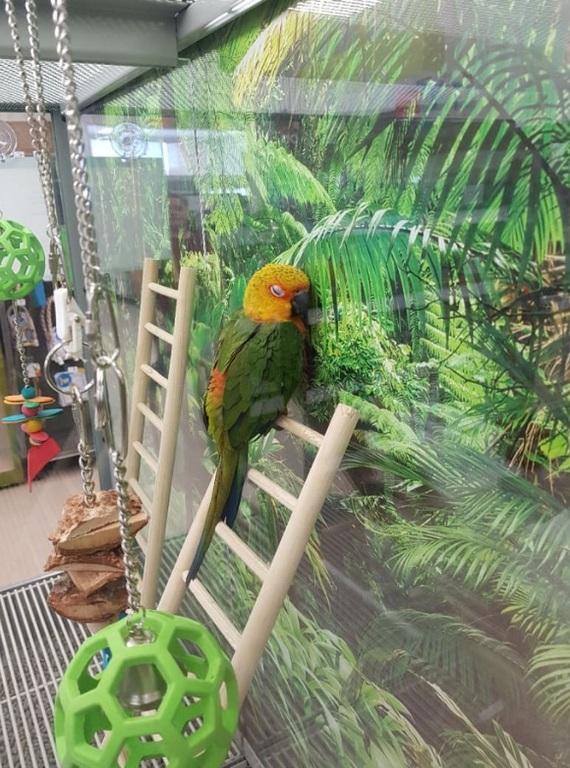 Эта птичка прижимается к фотографии джунглей. Думаю, что ей чего то не хватает.