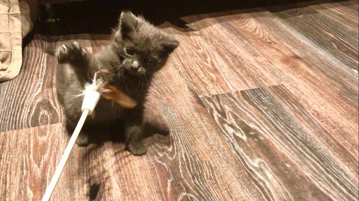 Котячья школа Кот, Ищу дом, Спасение, Помощь животным, В добрые руки, Москва