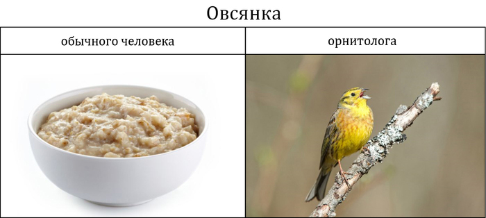 Звонарь курильщика Орнитология, Птицы, Хованский, Гнойный, Стэтхем, Длиннопост