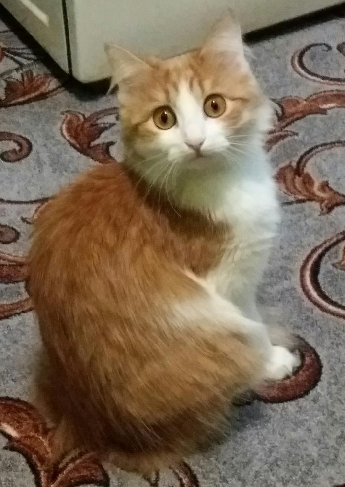 Взгляд ленивой хищницы Муха, Вроде кошечка, Этот взгляд, Кот