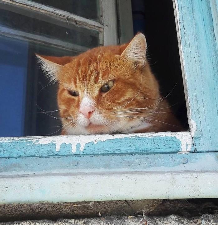 Немного о рыжем и не очень счастье Кот Шредингера, Кот, Домашние животные, Длиннопост