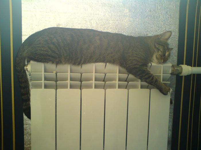 Обнимашки с батареей Кот, Холод, Батарея