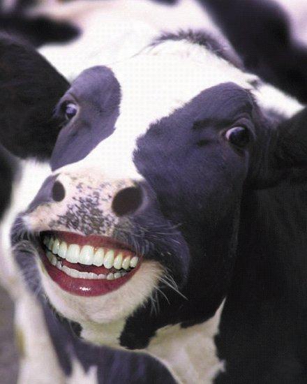 девушк на половину корова глаголы это