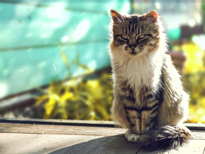Кот и последние теплые дни... Моё, Кот, Nikon d3100, Фотография