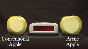 Про яблоки, которые не темнеют на воздухе Гмо, Генная инженерия, Яблоки, Полифенолоксидаза, Гифка, Длиннопост