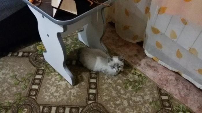 Котёнок ищет дом, Усть-Каменогорск. Усть-Каменогорск, В добрые руки, Кот