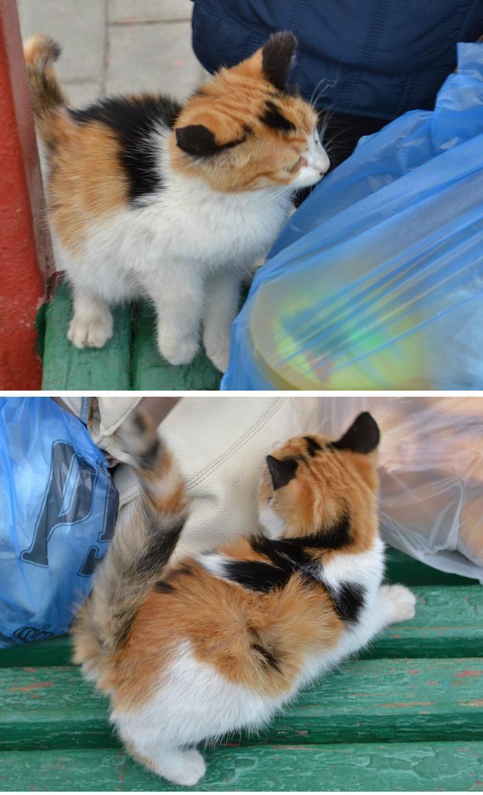 На удачу. Кот, Трехцветная кошка, На удачу, Фотография