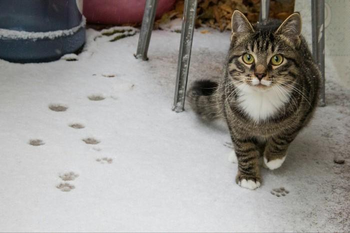 Первый снег кота Бублика