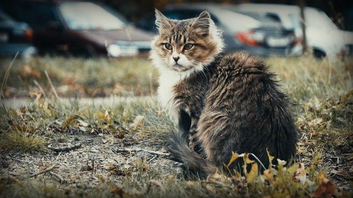 Котик осенний Кот, Фотография, Осень, Canon 600D, Canon, Советская оптика