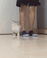 Да тут всё укороченное: носки, шаги, лапки...