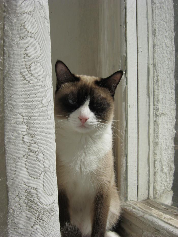 Пропала кошка Кот, Потерялся кот, Поиск, Помощь, Курск, КЗТЗ, Длиннопост