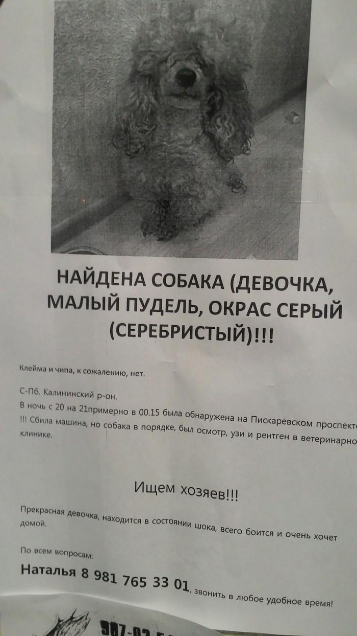 СПб. Найдена собака. Найдена собака, Объявление, Санкт-Петербург, Собака, Помощь животным