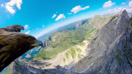 Зачем нужен квадрокоптер, если можно прицепить GoPro к орлу